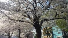 華舞斗 あずみ 公式ブログ/おはようございます 画像1