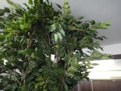 新人 公式ブログ/ビフォアフター オフィスハマダ その10 木をはやす 画像3