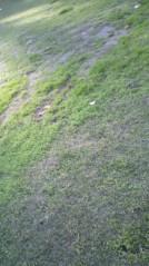 滴草由実 公式ブログ/よか天気 画像1