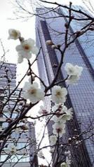 滴草由実 公式ブログ/春!? 画像1