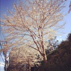滴草由実 公式ブログ/咲いた! 画像2