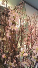 滴草由実 公式ブログ/桜だぁ 画像1