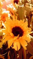 滴草由実 公式ブログ/夏の花 画像1