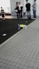 滴草由実 公式ブログ/サッカー犬 画像2