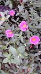 滴草由実 公式ブログ/お花さん 画像2