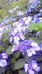 滴草由実 公式ブログ/梅雨入り♪ 画像1
