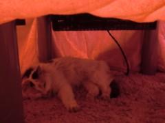 池田久美 公式ブログ/猫はコタツで丸くなる♪ 画像2