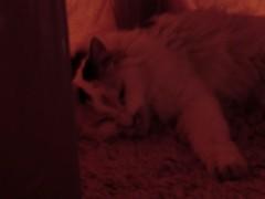 池田久美 公式ブログ/猫はコタツで丸くなる♪ 画像3