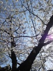 倉田悠貴 公式ブログ/満開宣言(*^ω^*) 画像1