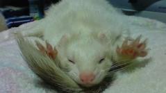 道祖土絵美 公式ブログ/おやすみなさい 画像1