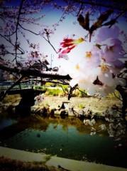 さゆ 公式ブログ/桜。 画像2
