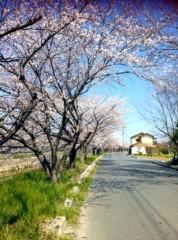 さゆ 公式ブログ/桜。 画像1