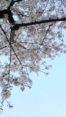 美彩 公式ブログ/満開 画像1
