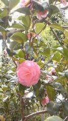 美彩 公式ブログ/2011-04-22 12:26:38 画像2