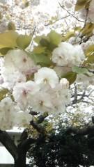 美彩 公式ブログ/2011-04-22 12:26:38 画像1