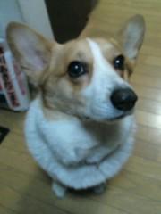 今井仁美 公式ブログ/わん 画像1