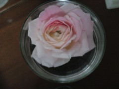 今井仁美 公式ブログ/薔薇 画像1