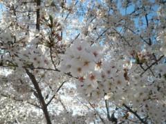 今井仁美 公式ブログ/sakura 画像2