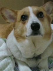 今井仁美 公式ブログ/美男犬 画像1