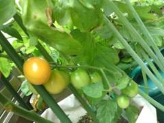 今井仁美 公式ブログ/トマト 画像1