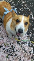 今井仁美 公式ブログ/にこっ♪ 画像1