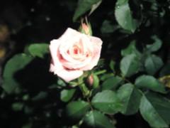 今井仁美 公式ブログ/美 画像1