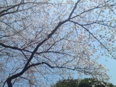 今井仁美 公式ブログ/庭園 画像2