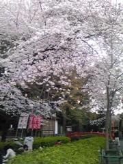 かなやす慶行 公式ブログ/花見…の巻 画像1
