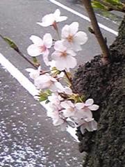かなやす慶行 公式ブログ/花見…の巻 画像3
