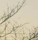 カンカン 公式ブログ/未確認飛行物体!? 画像2