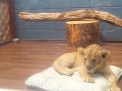 カンカン 公式ブログ/ライオン 画像2