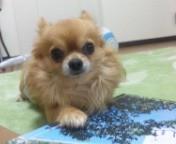 ニコ☆モコ 公式ブログ/わんちゃん   byハルカ 画像1