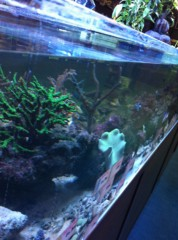 きりばやしひろき 公式ブログ/激しい熱帯魚 画像1