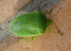きりばやしひろき 公式ブログ/昆虫の予知能力 画像1