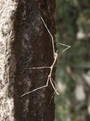 きりばやしひろき 公式ブログ/虫の話 画像1