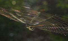 きりばやしひろき 公式ブログ/蜘蛛の秘密   画像1
