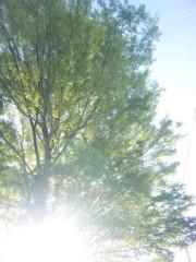 咲乃藍里 公式ブログ/まっすぐにのびて 画像1