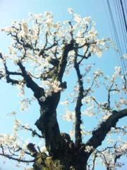 咲乃藍里 公式ブログ/'etoileがごにょごにょ… 画像1