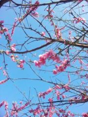 咲乃藍里 公式ブログ/みなさまに、ご報告。 画像1