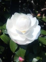 咲乃藍里 公式ブログ/ 僕にできること。僕ができること。  画像1