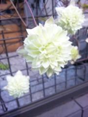 咲乃藍里 公式ブログ/素直なひと。 画像1