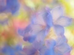 咲乃藍里 公式ブログ/ 「君に見せたい、ばしょがあるんだ。」 画像1