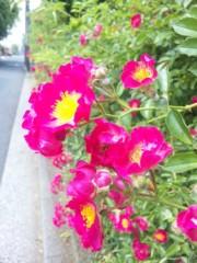 咲乃藍里 公式ブログ/( )の気持ち。 画像1
