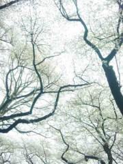 咲乃藍里 公式ブログ/「確かなものへ。」 画像1