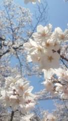 楠玲奈 公式ブログ/桜☆ 画像1