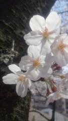 楠玲奈 公式ブログ/桜☆ 画像3