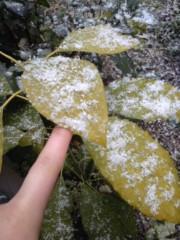木乃下のの 公式ブログ/雪だー 画像3