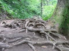 麻井美李 公式ブログ/自然に還って。 画像1
