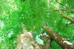 麻井美李 公式ブログ/神々のひとり言☆ 画像2