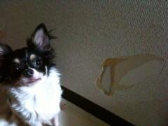麻井美李 公式ブログ/甘えん坊はだぁーれだっ! 画像1